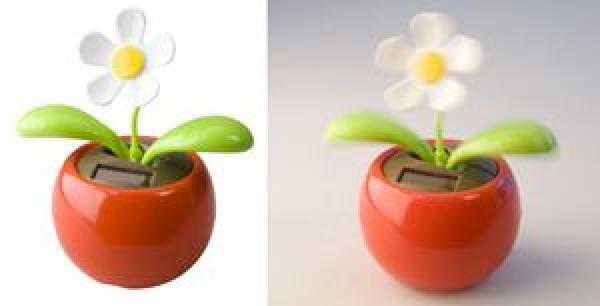 Samba flower